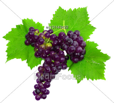Branch Of Black Grapes . Isolated Over White Stock Photo