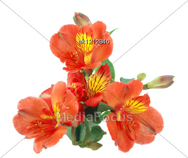 Branch With Orange Flowers And Green Leaf Close-up Studio Photography Stock Photo