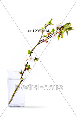 Branch Of Peach Flowers In Glass Stock Photo