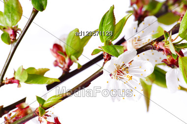 Branch Of Peach Flowers Stock Photo