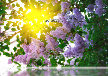 Branches Of Lilac On Abstract Background Stock Photo