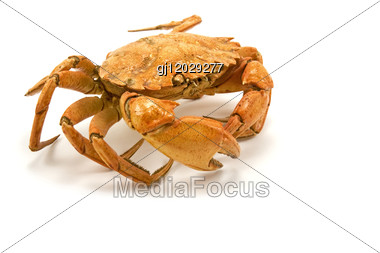 Brown Cooked Crab Stock Photo