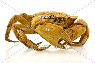 Brown Crab With Reflection Stock Photo