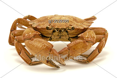 Brown Dried Crab Stock Photo