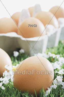 Brown Eggs In Carton In Field Of Grass Stock Photo