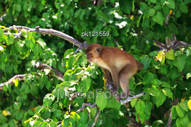 Brown Monkey Sitting At A Green Tree Branches Stock Photo