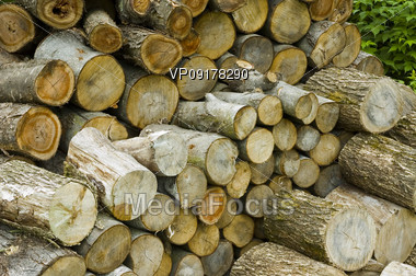 bunch of stacked logs Stock Photo