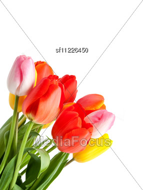 Bunch Of Tulips Stock Photo