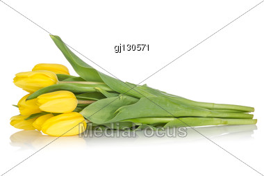 Bunch Of Yellow Tulips With Reflection Stock Photo