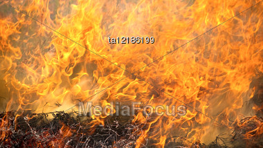 Burning Dry Grass During The Summer Wildfires Stock Photo
