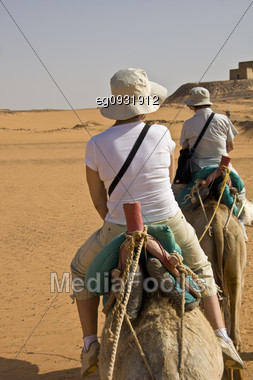 Camel With Their Camels In The Desert Of Nubia, Work Leading To The Tourists.buscar Stock Photo