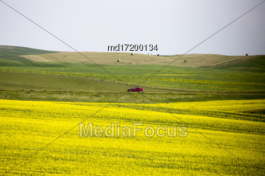 Canola Field Saskatchewan Scenic Yellow Flowers Canada Stock Photo