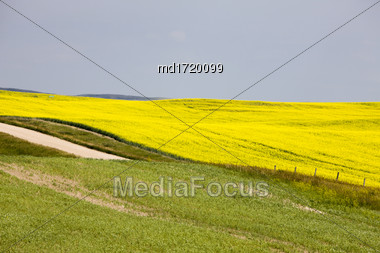 Canola Field Saskatchewan Scenic Yellow Flowers Canada Stock Photo