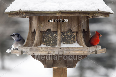 Cardinal At Bird Feeder Snow Storm Canada Male Red Stock Photo