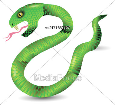 Cartoon Green Snakes Isolated On White Background Stock Photo