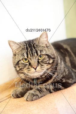 Cat Resting On The Floor Stock Photo