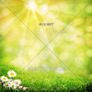 Chamomile Flowers On The Misty Meadow, Abstract Natural Backgrounds Stock Photo