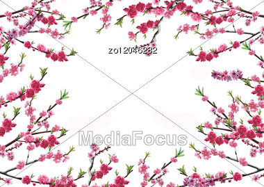 Cherry Branch With Pink Flowers Stock Photo