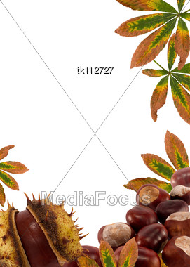 Nature Picture Frames on Chestnuts And Leaves Autumn Nature Frame Background For Text On White