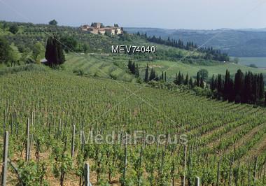 Chianti Vineyards, Tuscany, Italy Stock Photo