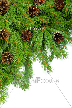 Christmas Background With Cones Isolated On White Stock Photo