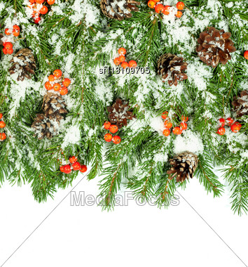 Christmas Background With Snow, Cones And Holly Berry Isolated On White Stock Photo