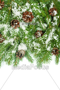 Christmas Background With Snow, And Cones Isolated On White Stock Photo