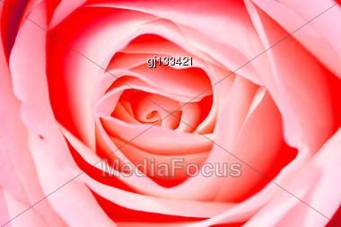 Close Up Background Of Beautiful Red Rose Petals Stock Photo