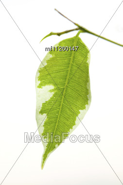 close up green spring leaf Stock Photo