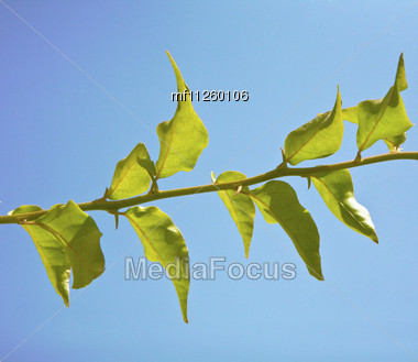 close up green spring leafs over blue sky Stock Photo