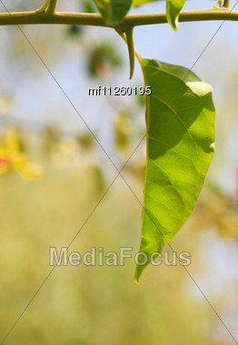close up green spring leafs Stock Photo