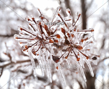 Close Up Of Ice On A Tree In Winter Stock Photo