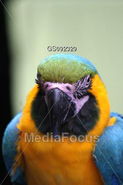 close up of a wild ara Stock Photo