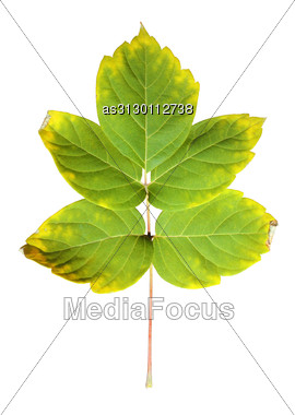 Close-up Of Autumn Leaf On White Stock Photo