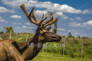 Close-up View Of A Deer In Its Captive Habitat Stock Photo