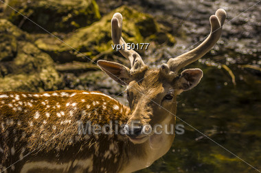 Close-up View Of A Deer In Its Natural Habitat Stock Photo