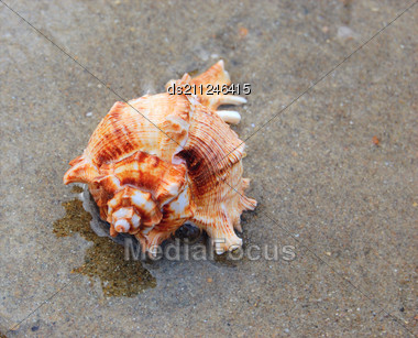 Closeup Of Colored Sea Shell Over Wet Sand Stock Photo