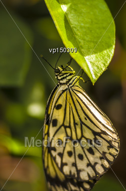 Closeup Macro Shot Of A Butterfly A On Leaf Stock Photo