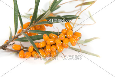 Cluster Mature Orange Sea-buckthorn Berries With Leaves On A White Stock Photo