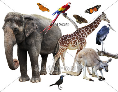 Collage Of Animals Images On White Background Stock Photo