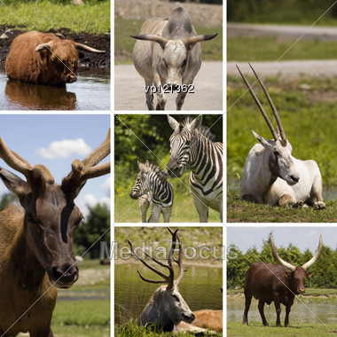 Collage Of Seven Different Animals In The Same Picture Stock Photo