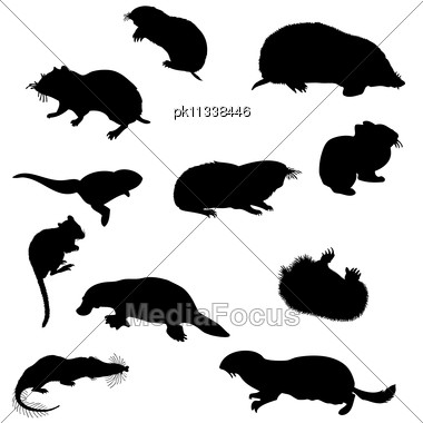 Collection Of Beaver And Other Rodents Silhouettes. Stock Photo