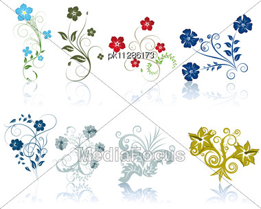 Collection Of Different Vector Berries And Flowers Stock Photo