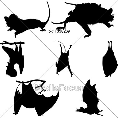 Collection Of Bats Silhouettes. Stock Photo