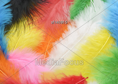 Colorful Feathers Close Up For Background Stock Photo