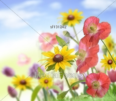 Colorful Flowers ,Close Up For Background Stock Photo