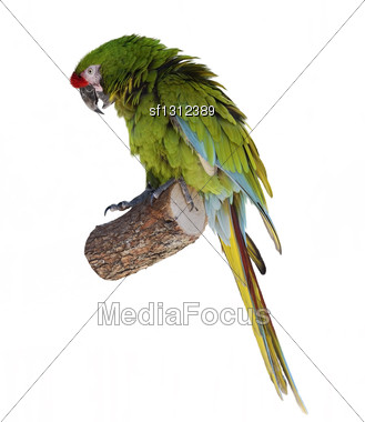 Colorful Green Parrot Macaw Stock Photo