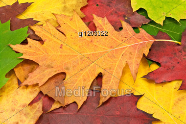 Colorful Image Of Fallen Leaves. Perfect For Seasonal Use Stock Photo