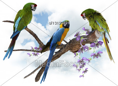 Colorful Macaw Parrots Perching On A Big Branch Stock Photo
