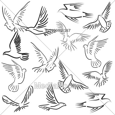 Gallery For &gt Dove In Flight Drawing